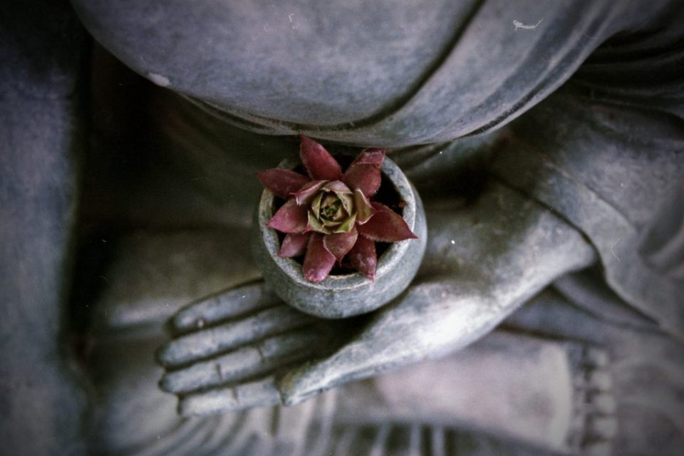 Reto meditacion macrobiotica zen